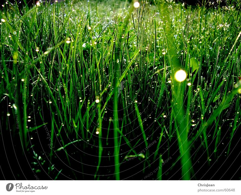 Morning dew 3 Grass Dew Relaxation Dangle Calm Blade of grass Meadow Stand Vertical Sunrise Love of nature Green Background picture Tree Bushes Plant Life