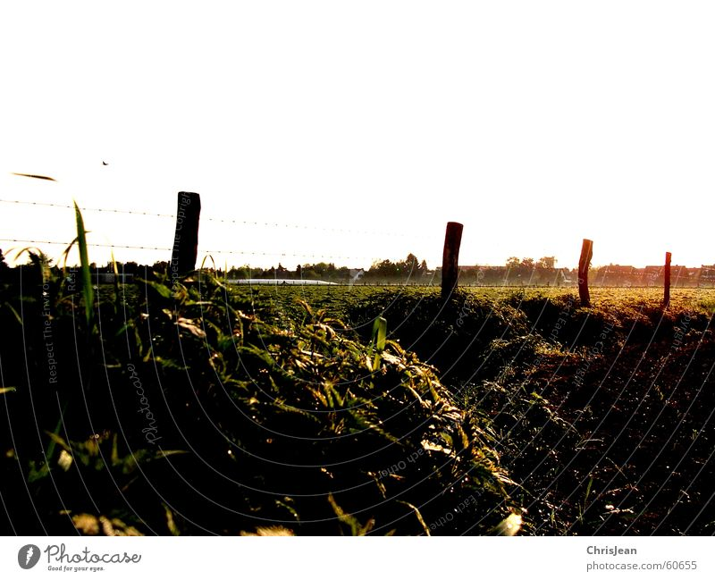 untitled Sun Earth Warmth Grass Field Esthetic Agra Working in the fields Pasture Stinging nettle Pole why solar heat Floor covering Morning Sunlight Sunrise