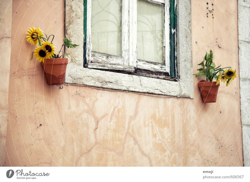 windows Plant Flower Village House (Residential Structure) Wall (barrier) Wall (building) Facade Window Old Yellow Sunflower Colour photo Multicoloured