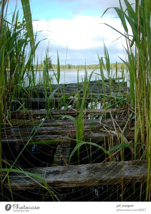 The dilapidated footbridge Ocean Footbridge Common Reed Lake Decline Water Lower Saxony