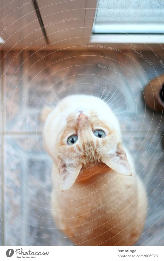 instant Animal Pet Cat Animal face 1 Wait Colour photo Interior shot Bird's-eye view Looking into the camera