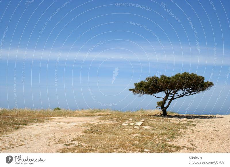 Sky Tree Sun Clouds Loneliness Landscape Earth Empty Mediterranean