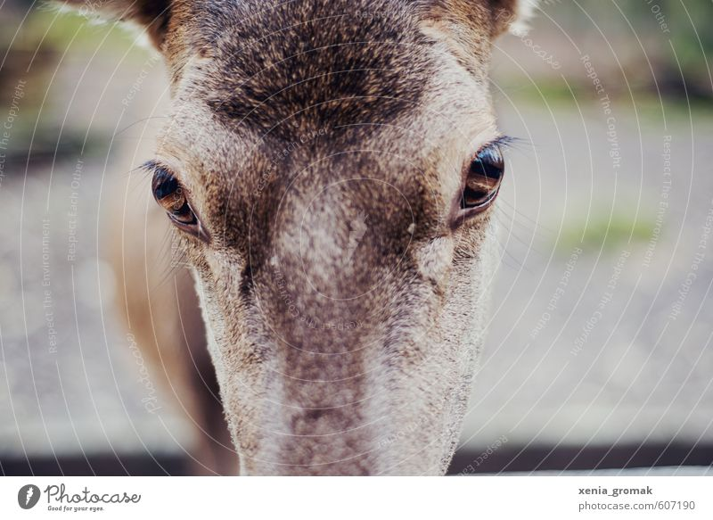 Nature Vacation & Travel Animal Environment Eyes Eyes Leisure and hobbies Wild animal Trip Fantastic Adventure Animal face Hunting Zoo Exotic Deer