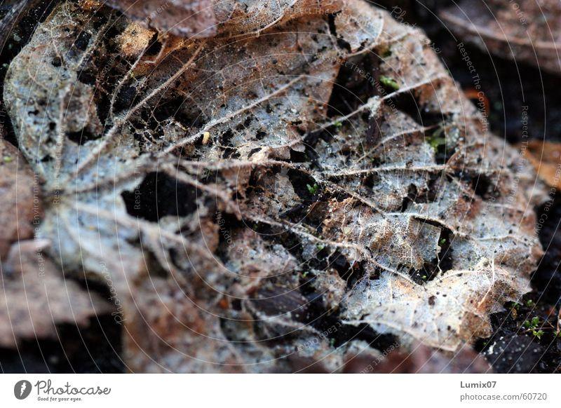 Old Leaf Brown Putrefy Decline Decompose Compost