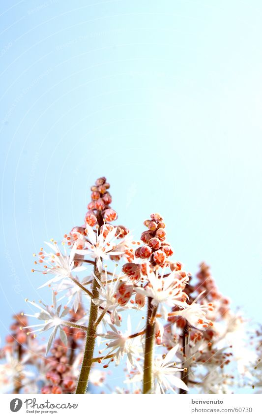 later in the spring Blossom Flower Apiaceae Spring Sky Vacation & Travel