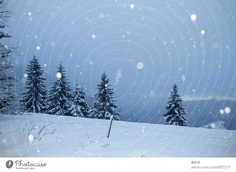 Weather | Snowfall in the heights Calm Vacation & Travel Tourism Environment Nature Winter Climate Ice Frost Tree Forest Mountain Peak Cold Blue White Fir tree