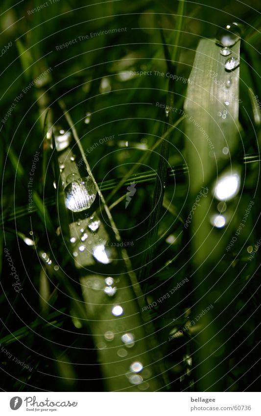 water pearls Grass Green Light Meadow Drops of water Water Rain Exterior shot