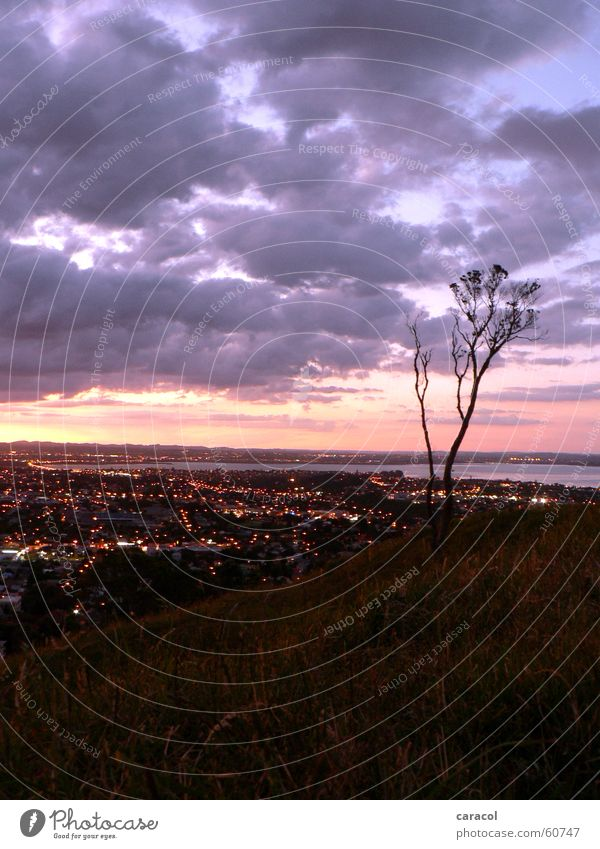 suburbia Tree Town Light Clouds Violet Pink Sunset Auckland Mount Eden New Zealand lights purple
