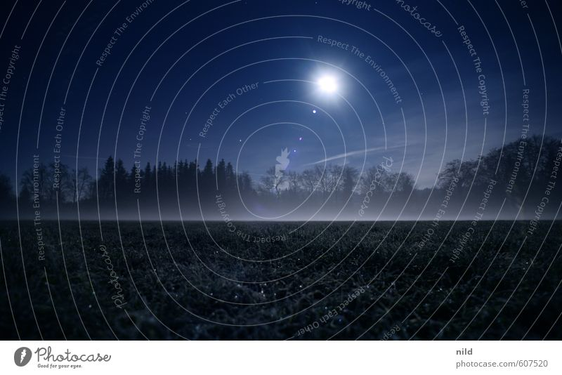 fog field Environment Nature Landscape Sky Night sky Moon Autumn Winter Weather Fog Ice Frost Meadow Field Dark Creepy Cold Blue Fear Colour photo Exterior shot