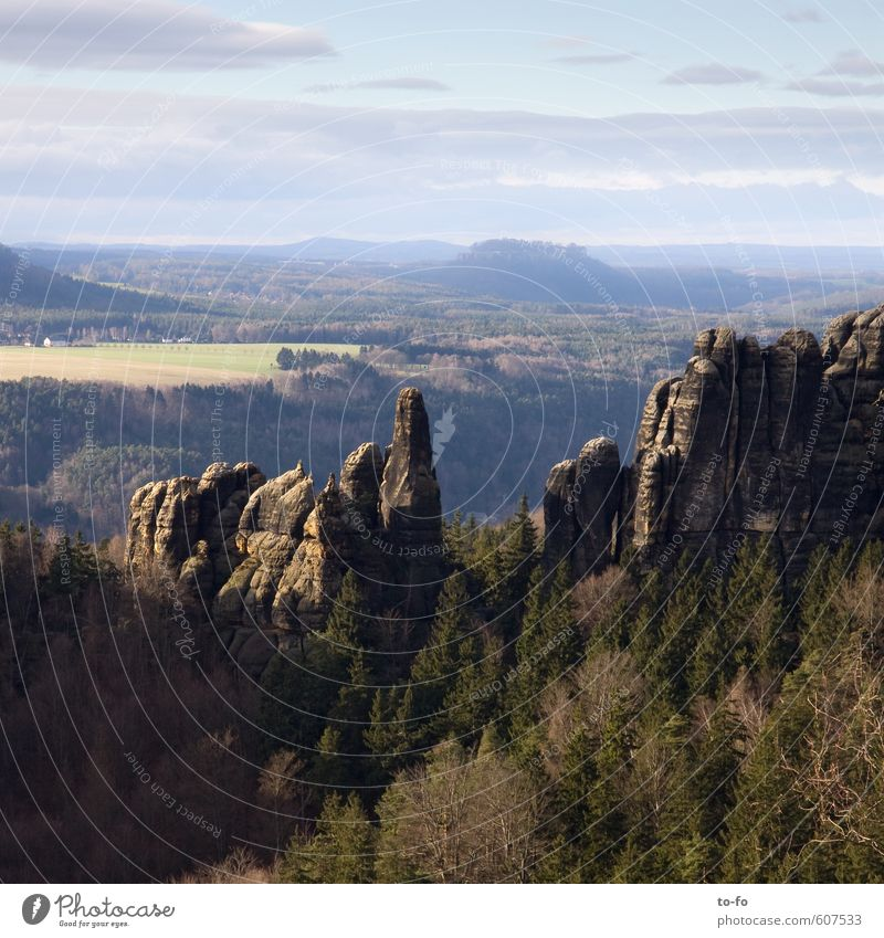 Nature Landscape Far-off places Forest Environment Mountain Rock Field Free Hiking Tall Hill Elbsandstone mountains Saxon Switzerland