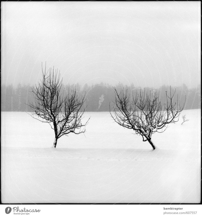 belatedness Winter Snow Environment Nature Landscape Plant Weather Tree Cold White Snowscape Contrast Analog Black & white photo Exterior shot Deserted