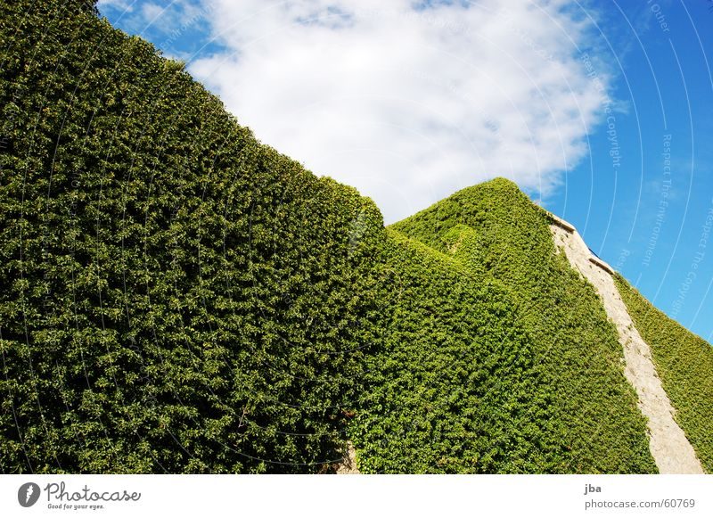 Sky Green Blue Plant Clouds Above Wall (barrier) Tall Tower Flat Tendril Ivy Fortress Cote d'Azur Castle wall