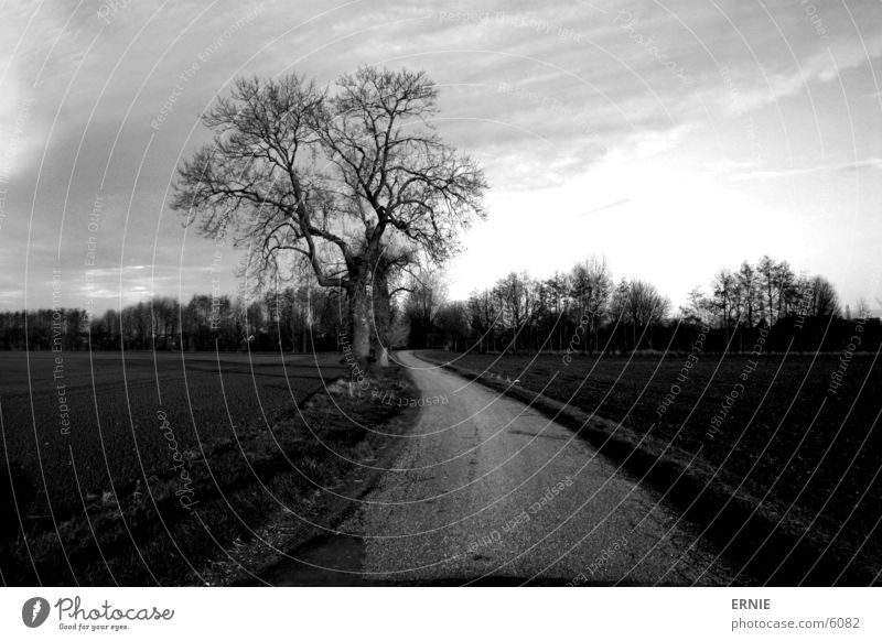 The way to the...? Tree Field Clouds Moody Concrete In transit Lanes & trails Sky Twig Nature canon EOS 300D Exterior shot