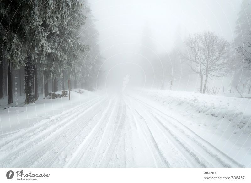 Sky Nature Tree Landscape Winter Cold Environment Street Snow Lanes & trails Horizon Moody Weather Fog Transport Climate