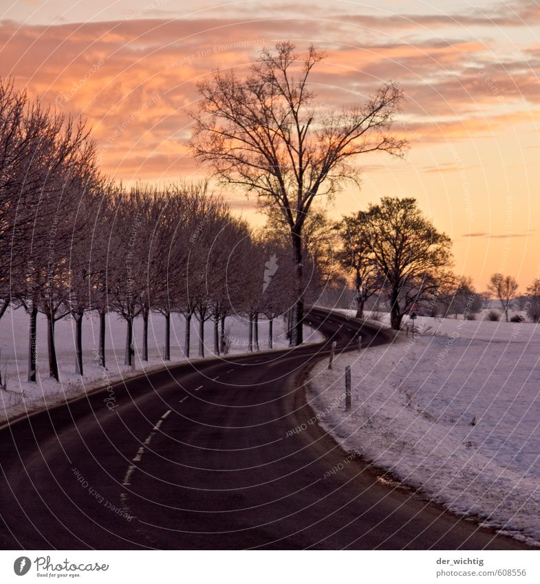 Street in the morning in the sunrise Nature Landscape Sky Horizon Sunrise Sunset Winter Weather Ice Frost Snow Tree Wild plant Forest Country road