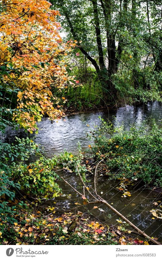 autumn Environment Nature Landscape Autumn Tree Bushes Forest Brook Fresh Cold Sustainability Natural Multicoloured Green Idyll Seasons Leaf Autumn leaves Calm