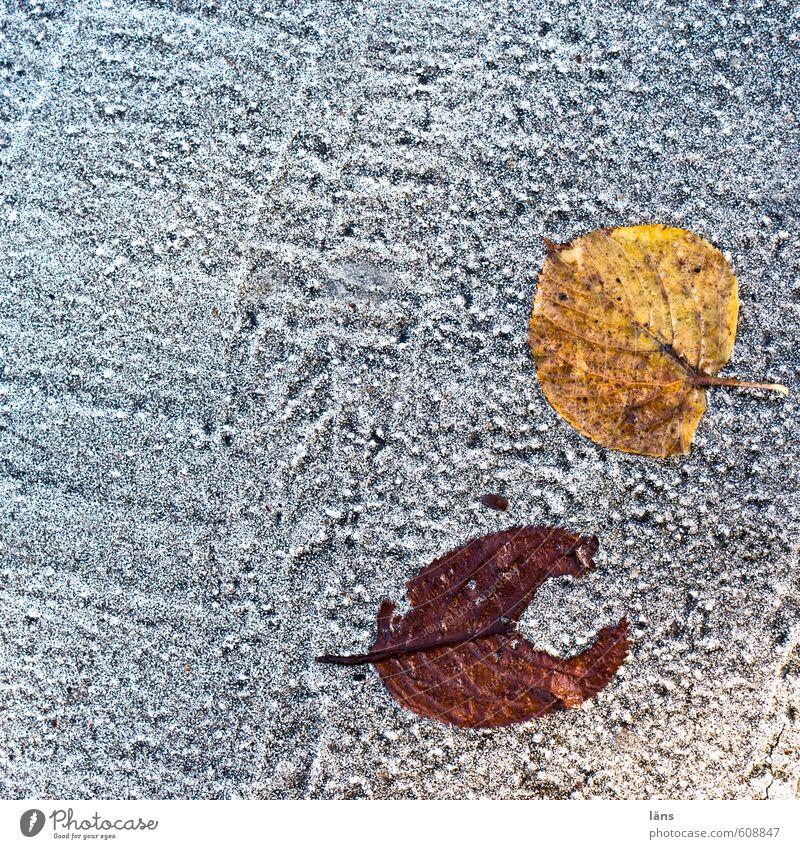 pac man < Autumn Leaf Street Lanes & trails Lie Structures and shapes Colour photo Exterior shot Copy Space left