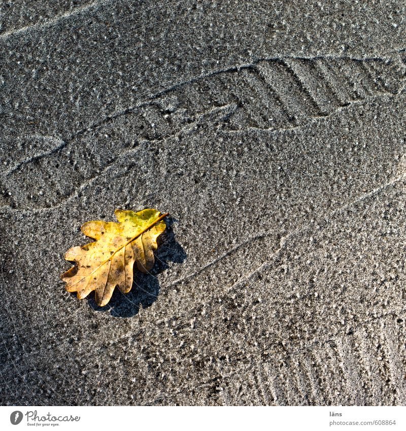 gold leaf Autumn Leaf Oak leaf Traffic infrastructure Street Lanes & trails Yellow Gray Transience Tracks Asphalt Tar Line Change Cute Colour photo Detail