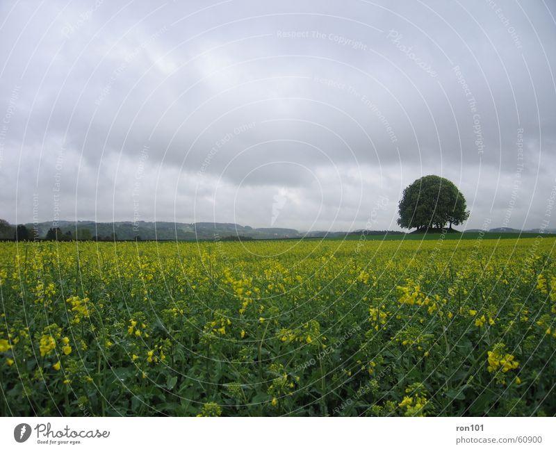 Tree Plant Flower Leaf Clouds Landscape Yellow Gray Rain Field Hill Canola Precipitation Canola field