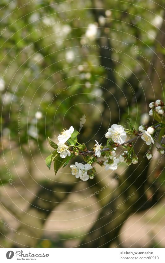 It's blooming! Nature Spring Tree Blossoming Growth Green Apple blossom Apple tree Sprout Maturing time Exterior shot Shallow depth of field Twig Detail
