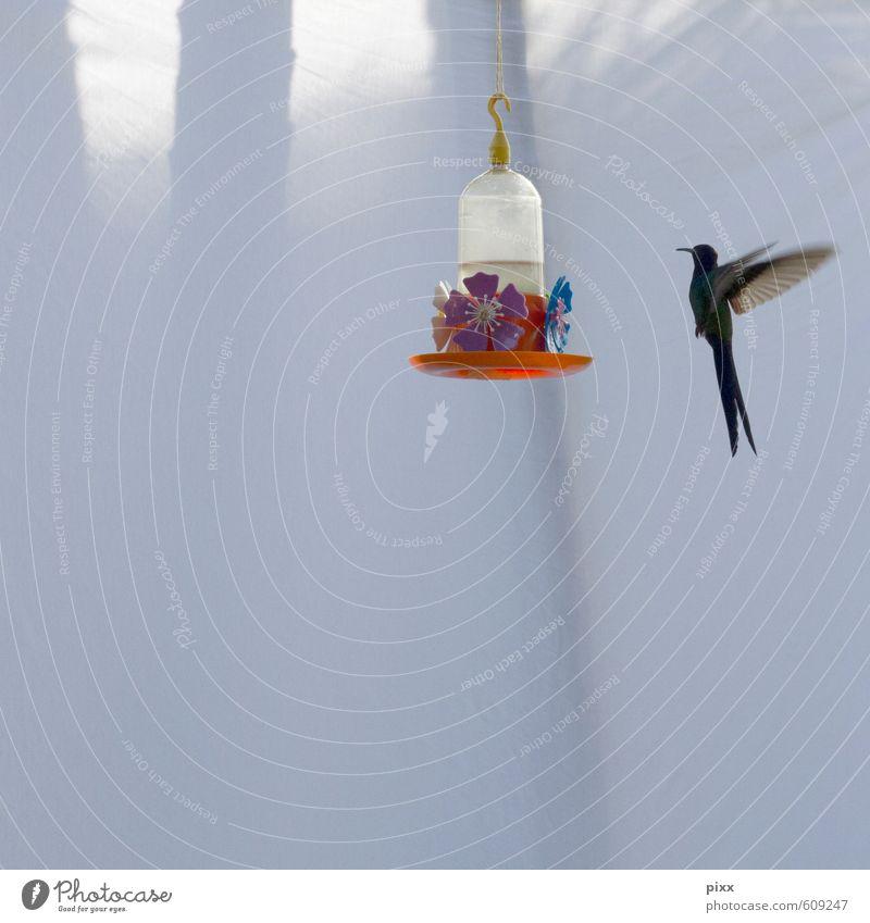 angels Vacation & Travel Summer Dance Nature Animal Sun Sunlight Penha Brazil South America Garden Wild animal Bird Wing Hummingbirds hummingbird 1 Discover