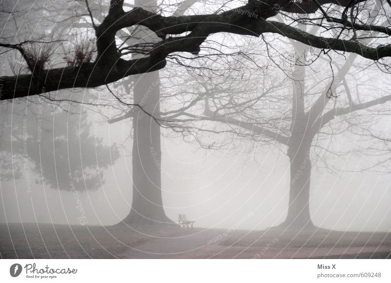 Nature Tree Landscape Winter Dark Cold Environment Sadness Emotions Autumn Death Gray Moody Weather Park Fog