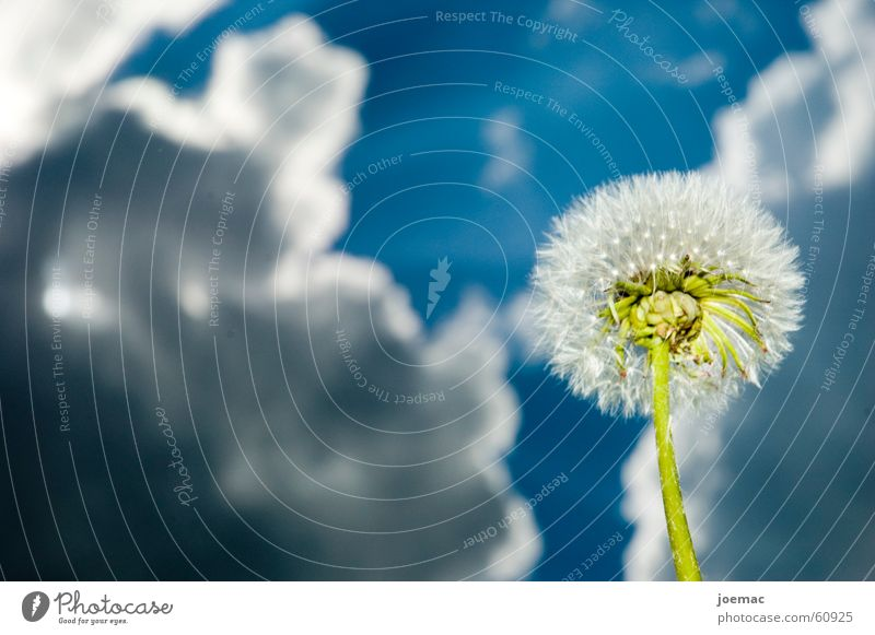 Sky Flower Green Blue Clouds Dandelion Thunder and lightning Storm