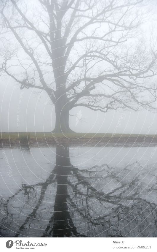 Nature Water Tree Landscape Winter Cold Environment Sadness Emotions Autumn Death Gray Lake Moody Weather Rain