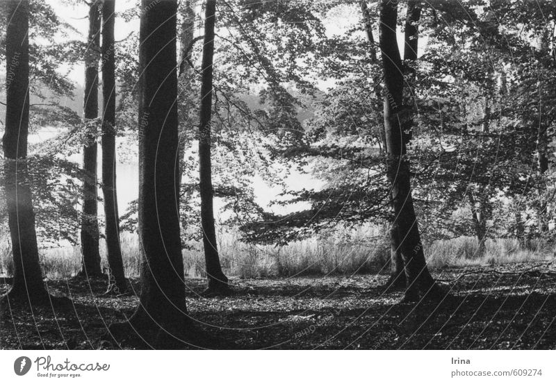 Camp Wild Nature Tree Forest Lakeside Relaxation Natural Retro Gray Black Moody Romance Attentive Caution Serene Patient Calm Idyll Nostalgia Analog