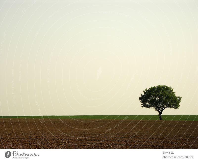 It's my favorite tree again :-) Tree Field Spring Leaf Loneliness Niederrhein Sky Nature Sparse