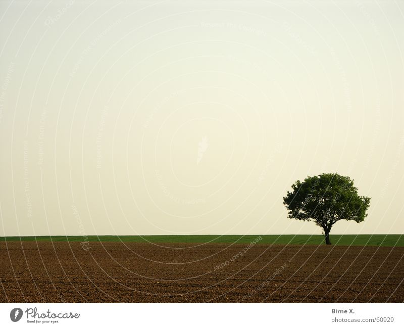 Nature Sky Tree Leaf Loneliness Spring Field Sparse Niederrhein