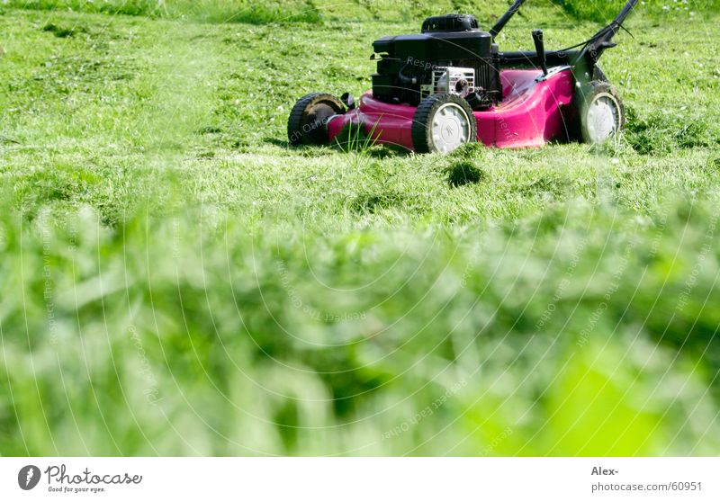 The gay lawnmower on the lookout Lawnmower Pink Homosexual Work and employment Crash Loud Grass Meadow Green Tepid Search drimmer Homosexual man Garden yarn