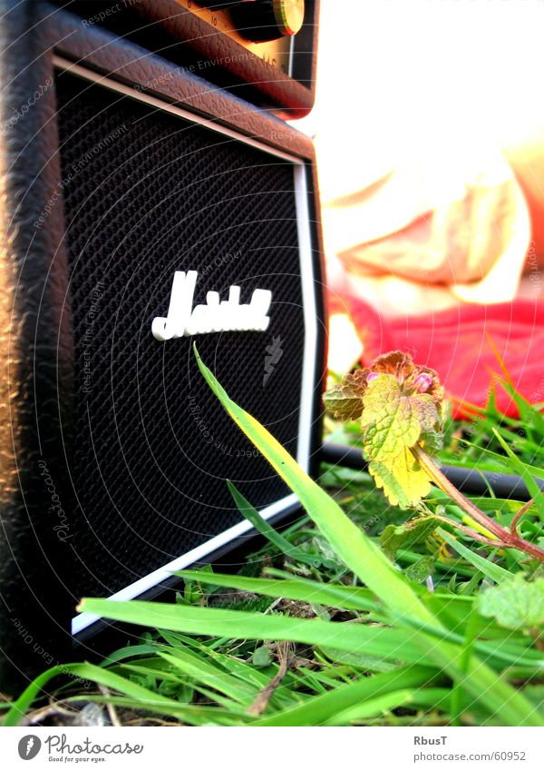 Green Plant Meadow Grass Spring Music Guitar Depth of field Loudspeaker Lust Musical instrument Sound Loud Whim Intensifier Membrane