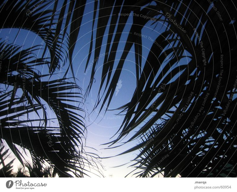 palm Lifestyle Exotic Vacation & Travel Far-off places Freedom Summer Summer vacation Sky Palm tree Relaxation Color gradient Byron Australia Frame Leaf