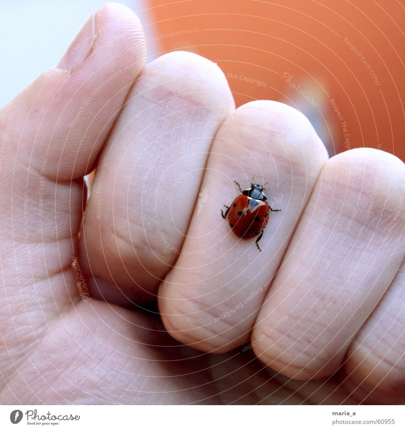 ladybug! Ladybird Hand Fingers Fist Summer Cold Thumb Forefinger Crawl Insect Red Black Glittering Fingernail Legs Beetle Joint Feeler Bow Orange Happy