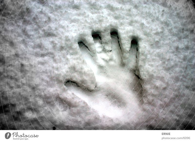 Hand White Cold Snow Style Fingers Thumb Imprint Fingerprint