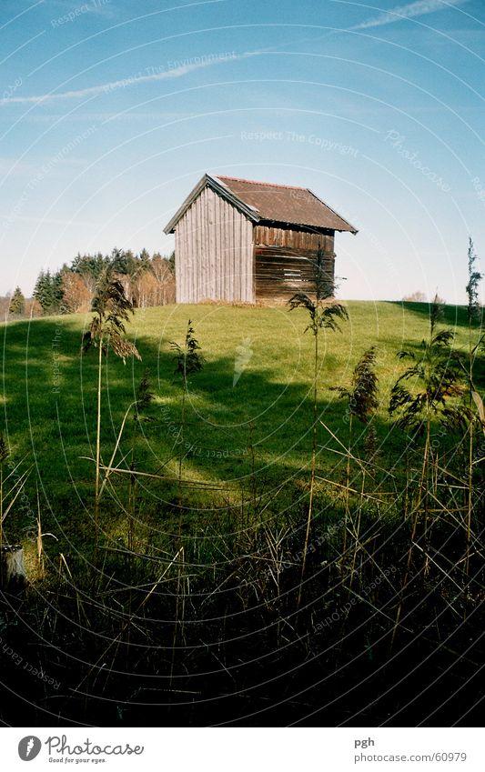 Sigi's cabin Green Meadow Hill Hut reed Sky Shadow Blue