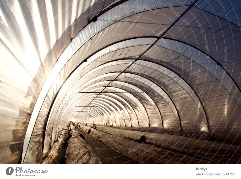 Exceptional Bright Illuminate Modern Perspective Climate Esthetic Agriculture Deep Long Tunnel Arch Forestry Workplace Strawberry Greenhouse