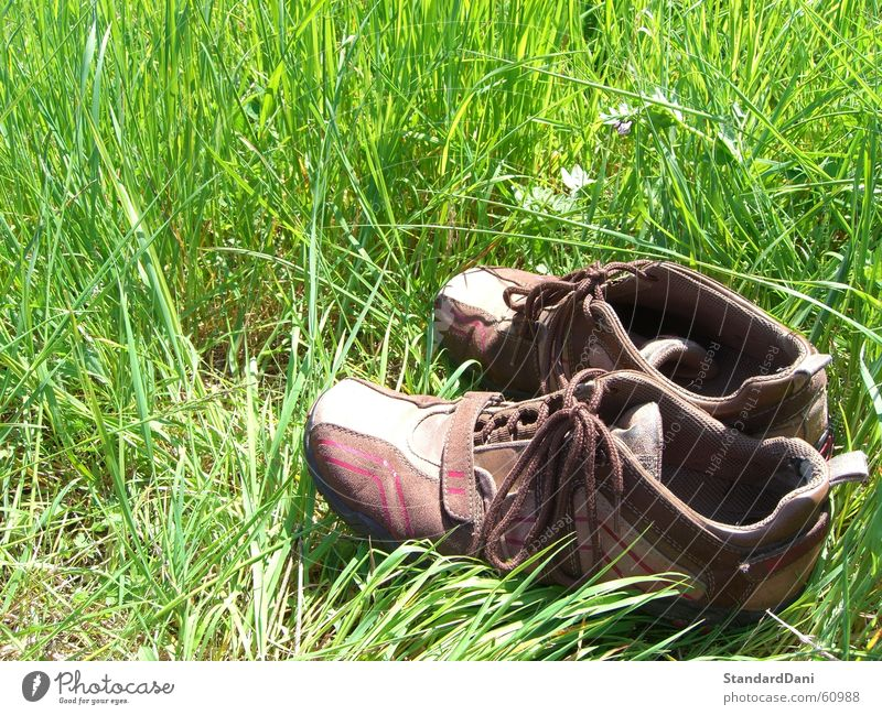 Back2Roots Meadow Ventilate Grass Green Resign Footwear Relaxation Calm Loneliness Lawn To be silent Grass surface Summer Clothing Nature idleness Pasture