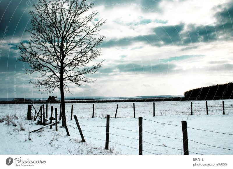 winter impression Tree Winter Fence Wood Cold Clouds Snow Cover Nature Landscape Exterior shot