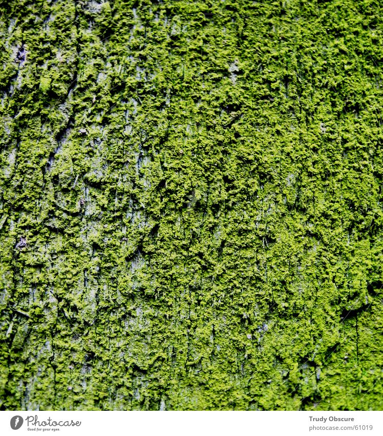 Green Wood Moss Material Wooden board Bowl Surface Tree bark