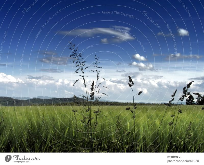 Sky Summer Clouds Meadow Grass Spring Landscape Field