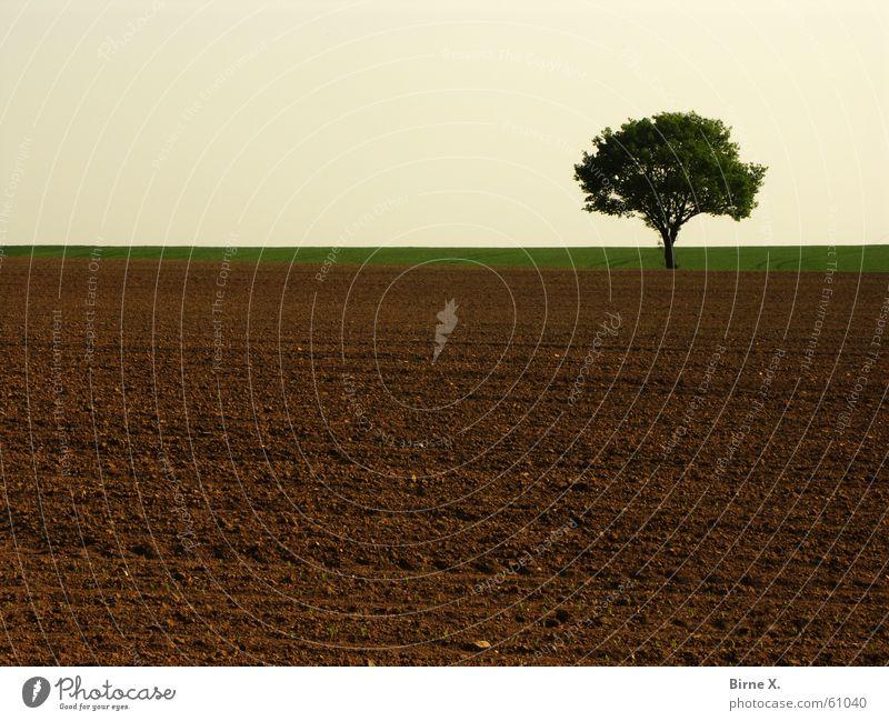 Lonely tree 2 Tree Field Loneliness Niederrhein Nature Sky Earth