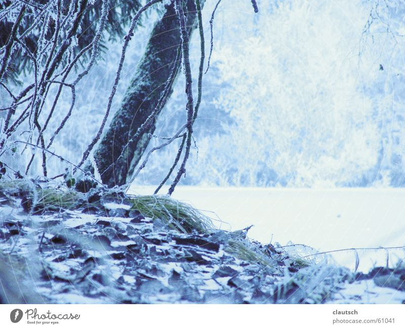Water Tree Blue Winter Calm Forest Cold Meadow Lake Landscape Ice Frost Floor covering Idyll Frozen Freeze