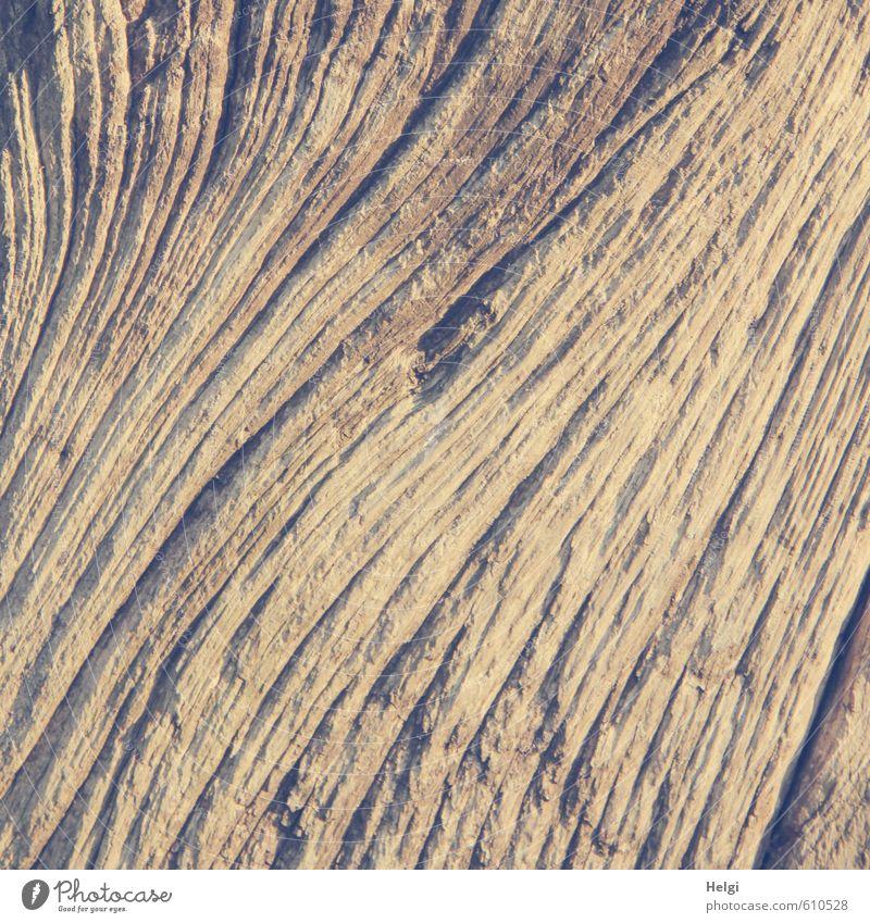structural Wood Line Wood grain Old Authentic Exceptional Dark Simple Uniqueness Natural Brown Senior citizen Esthetic Bizarre Life Nature Arrangement
