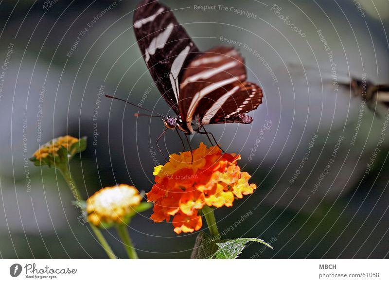 White Green Flower Leaf Black Eyes Animal Blossom Legs Orange Wing Insect Stalk Butterfly Feeler Trunk