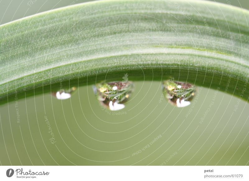 drop mirror Plant Drops of water Rain Flower Leaf Large Small Green Curved 2 Transparent grooved Smoothness Colour photo Exterior shot Macro (Extreme close-up)