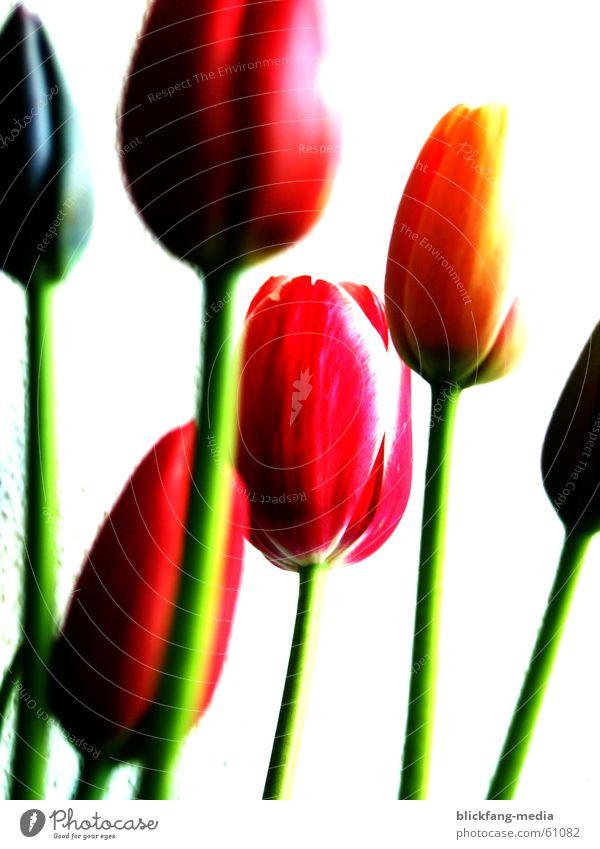 Beautiful Flower Summer Joy Colour Life Blossom Freedom Warmth Bright Growth Physics Stalk Friendliness Bouquet Beautiful weather