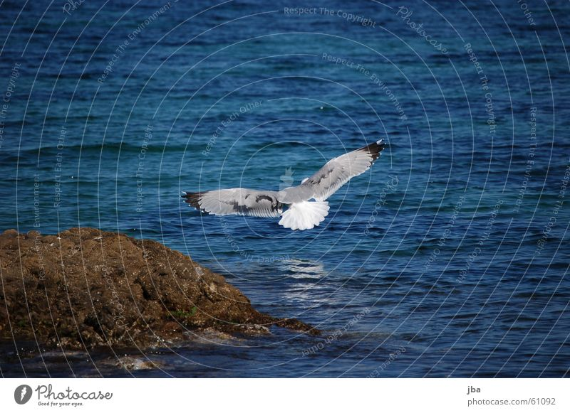 Take off! Seagull Ocean Reflection Far-off places Animal Span Beak Tails Black White Flying Aviation Wing Stone Water Eyes Sky Blue