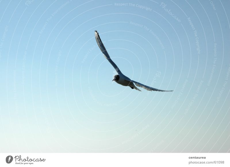 Sky Ocean Loneliness Animal Relaxation Freedom Air Bird Flying Search Seagull Wanderlust Task Glide